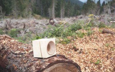 Una nuova vita per i boschi feriti